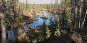 Outdoorsmen in the Swedish wilderness