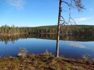 Wilderness lake in Swedish Lapland